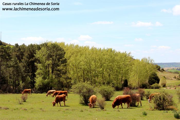 vacas espeja