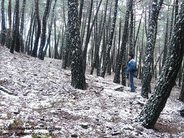 pinar de Espeja en invierno