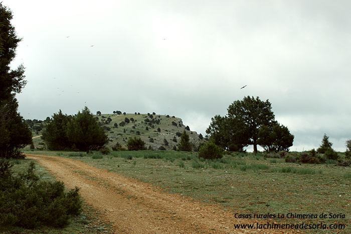 camino rural hacia el portillo parque natural canon del rio lobos