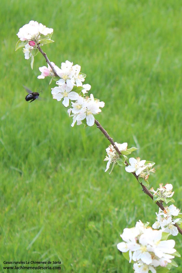 flor abeja frutal