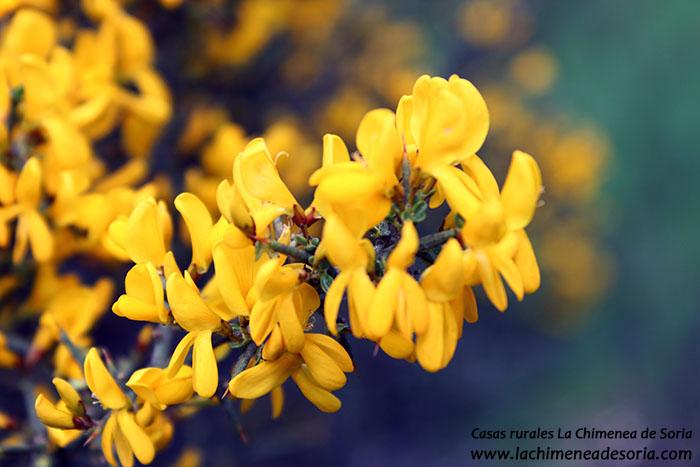 flor aliaga