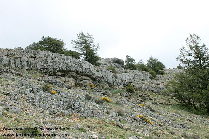 sierra de costalago parque natural canon de rio lobos 2