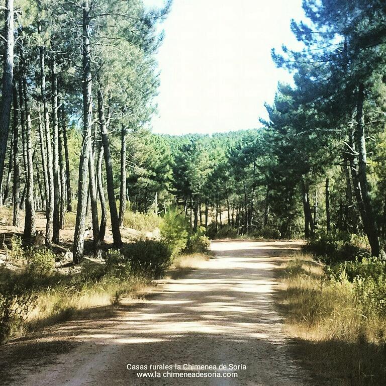 comarca de pinares Espeja de San Marcelino Soria