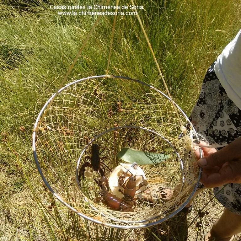 pescando cangrejos de río