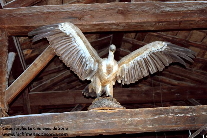 buitre leonado Casa del parque del Cañón del Río Lobos