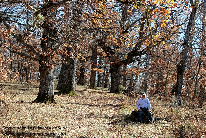 robledal de palacios de la sierra otoño