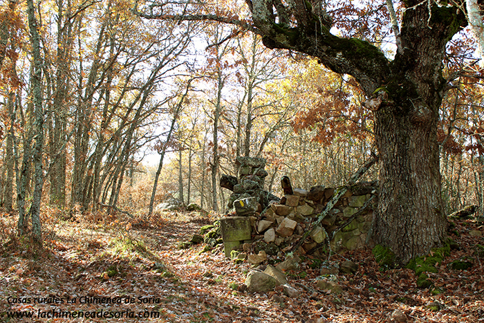 robledal de palacios otoño burgos