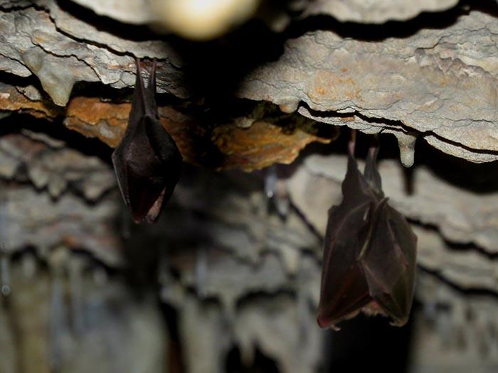 cueva de los candelones murciélagos parque natural cañon del rio lobos santa maria de las hoyas